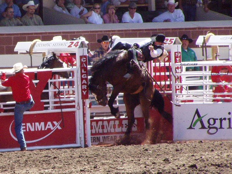 James Fagan History Blog Rodeo In New Zealand