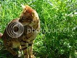 Tamleopardens Sparkling Ester