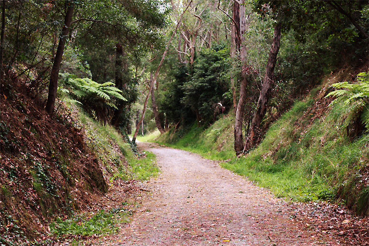 Lilydale to Warburton Rail Trail #1