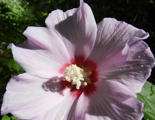 todayflowersDSCN9150