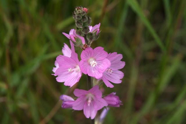 pink (tanner springs)