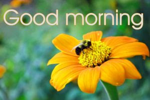 478 Good Morning Beautiful Flower Nature Girls Images Hd Download