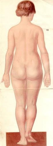 anatom37 8