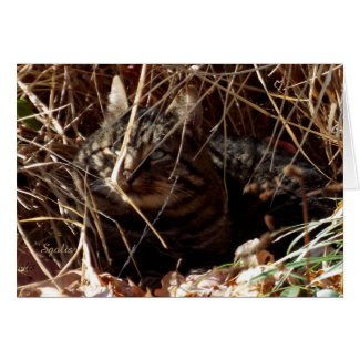 Feral Gray Tabby Cat in Woods Greeting Card