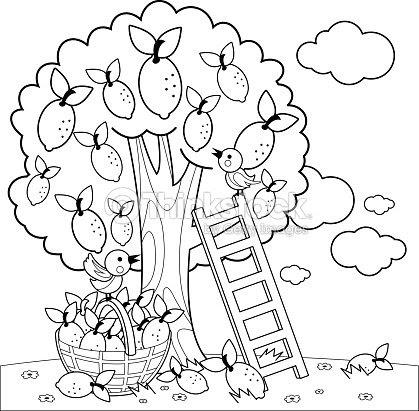 Cosecha De árbol De Limón Página De Libro Para Colorear Arte