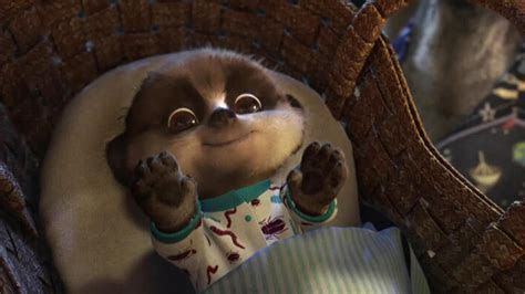 Meerkat Baby Oleg   HD Wallpapers