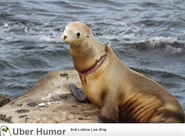 My Family Saw This Sea Lion Yesterday In La Jolla Ca Fishing Line