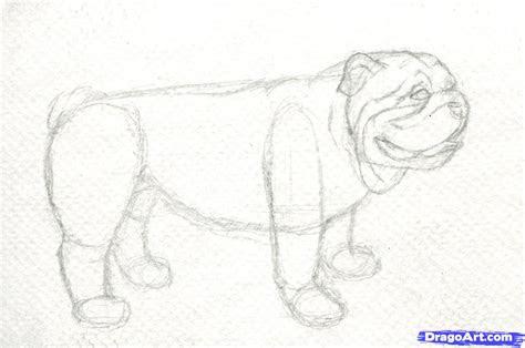 draw  realistic bulldog step  step realistic