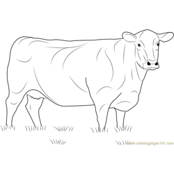 8400 Angus Cow Coloring Pages Pictures