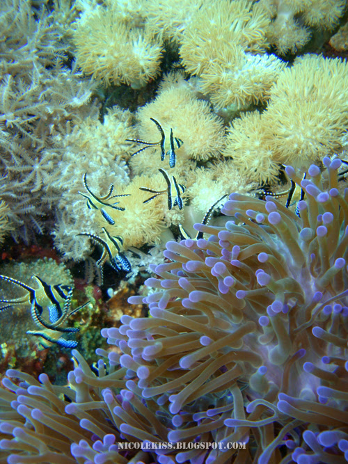 tropical fish_large