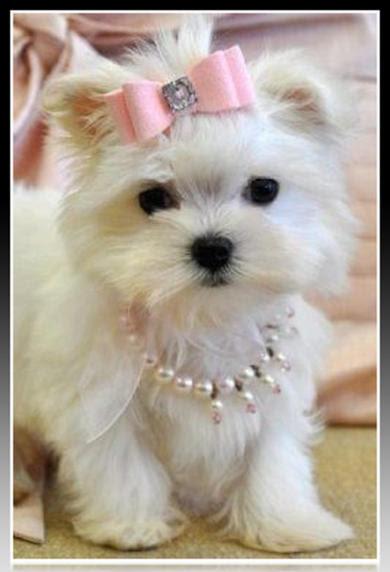 Complementos Para Perros Pequeños Imágenes De Ropa Para Perros