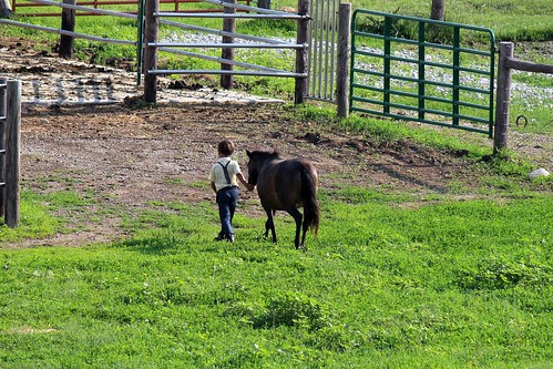 IMG_0159_Amish_Boy_Leading_Pony