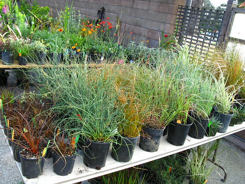 many grasses