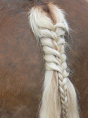 queue de cheval.jpg