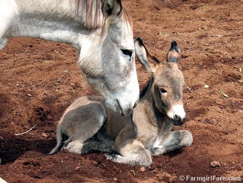The Daily Donkey 115