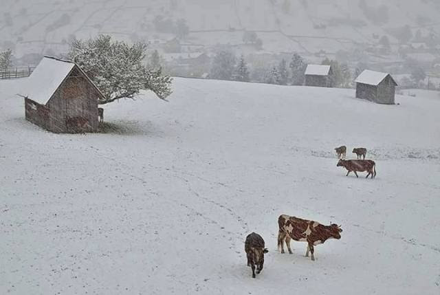 Bucovina -Suceava, Romania 10 2015