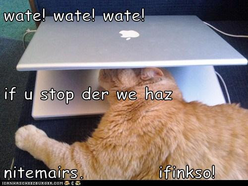 wate! wate! wate! if u stop der we haz nitemairs.          ifinkso!