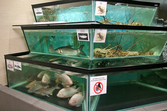 The live fish is neatly labelled in two languages