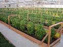 The Benefits of Having an Organic Garden | Greene Acres Community ...