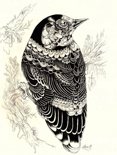 01 AnimalDrawing in Incredibly Amazing Animal Illustrations by Iain Macarthur