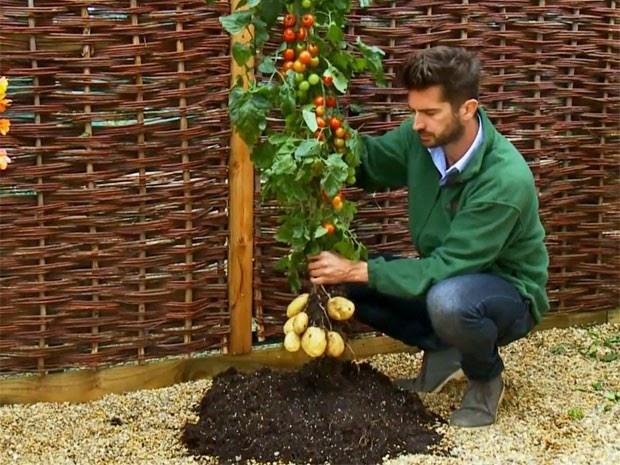 Empresa britânica vende planta que dá batatas e tomates