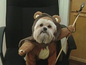 Image result for dress up your pet