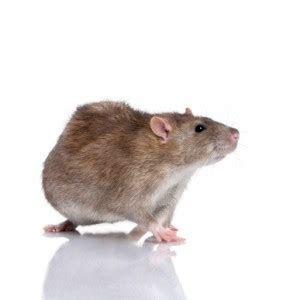 Safe & Effective Pest Control   Exterminator NYC   Absolute Death Pest Elimination