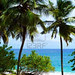 Caribbean Sea and Palmtrees in Martinique © Bluelight