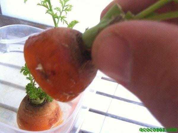 IMG 0729 Recreciendo plantas