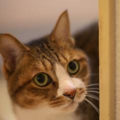猫の日2011