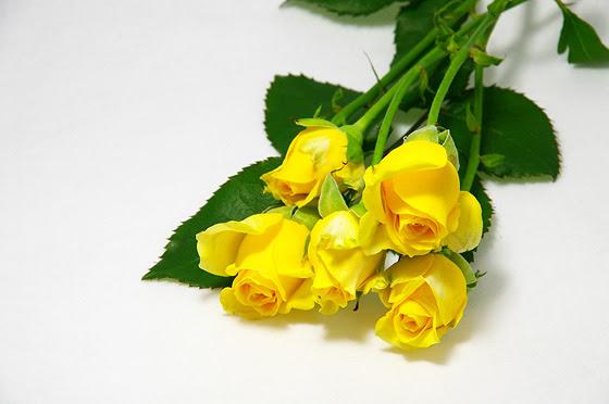黄色いバラ 無料 写真素材 Photo Index
