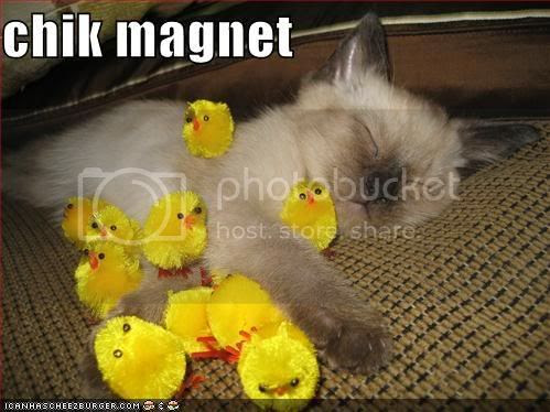 Chik Magnet Pictures, Images and Photos