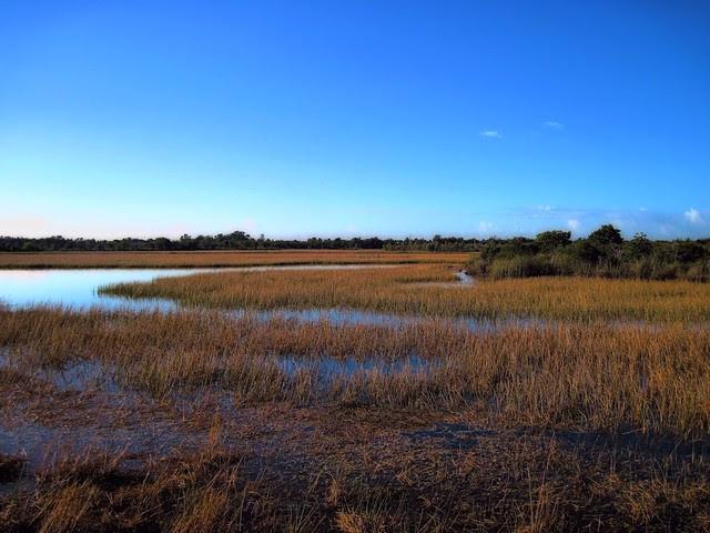 Chapel Trail Nature Preserve Low Key 20121207
