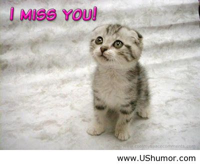 Funny I Miss You Animal Pictures Bigking Keywords And Pictures