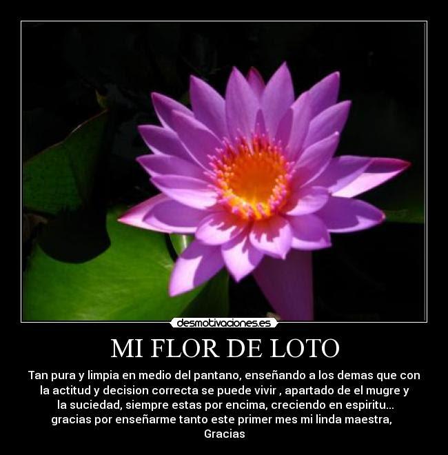 Mi Flor De Loto Desmotivaciones