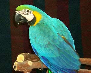 Pet Birds Images And Names Pet S Gallery