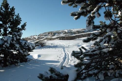 cross country skiing : skispor