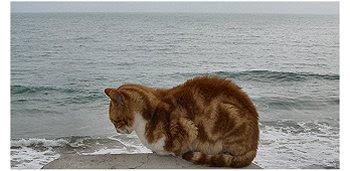 Gato - Albufeira