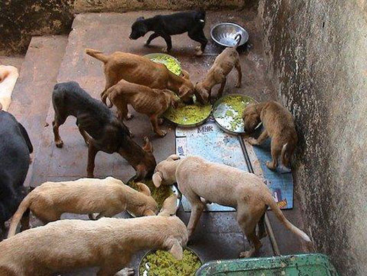 Goa Animal Welfare Trust Location Map,Location Map of Goa Animal Welfare Trust,Goa Animal Welfare Trust accommodation destinations attractions hotels map reviews photos pictures,goa animal welfare trust gawt,animal shelter in goa,compassion for animals foundation