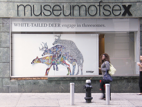 The Museum of Sex, NYC