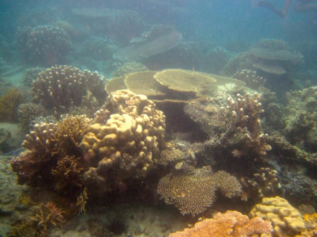 pulau macan22