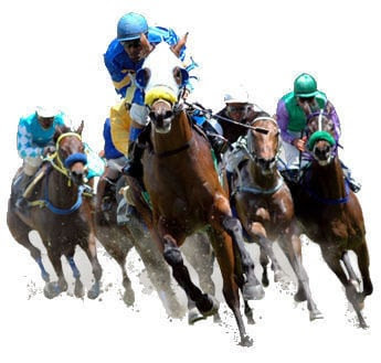 """Résultat de recherche d'images pour """"chevaux de courses"""""""