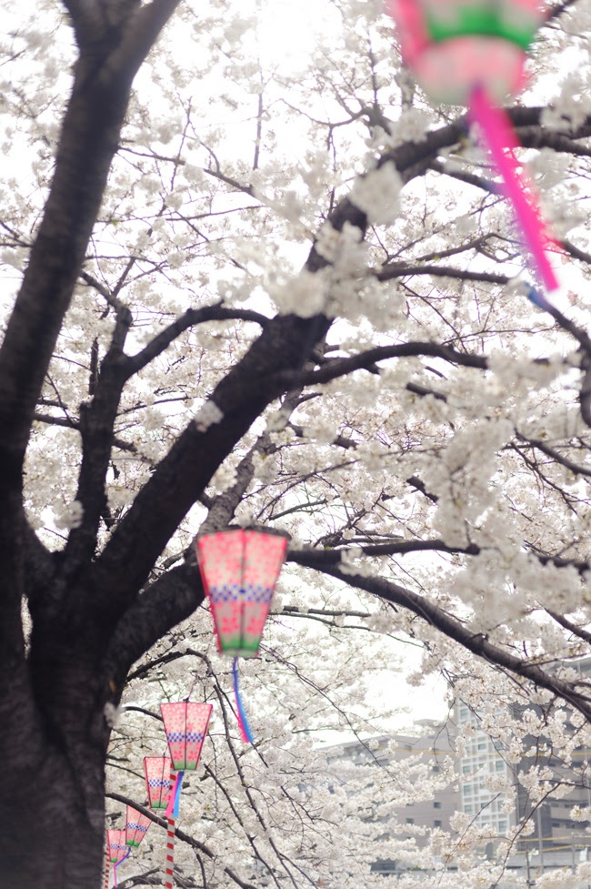 Photos of the Hanami in Yokohama