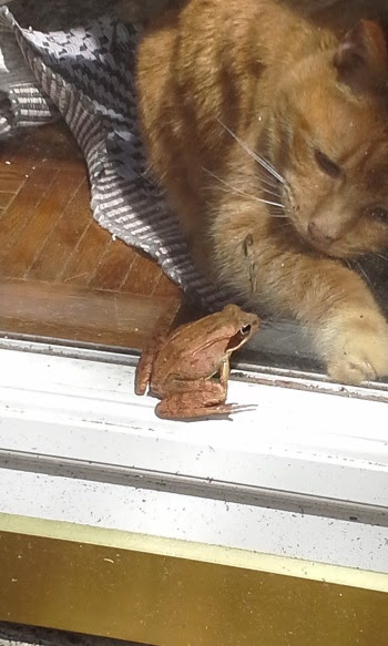 Murphy saying hello to a frog