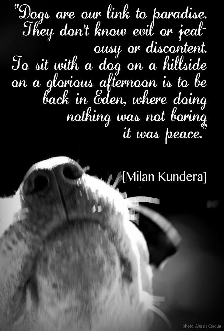Dogs Unconditional Love Quotes. QuotesGram