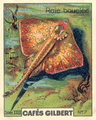 gilbert poissons 7