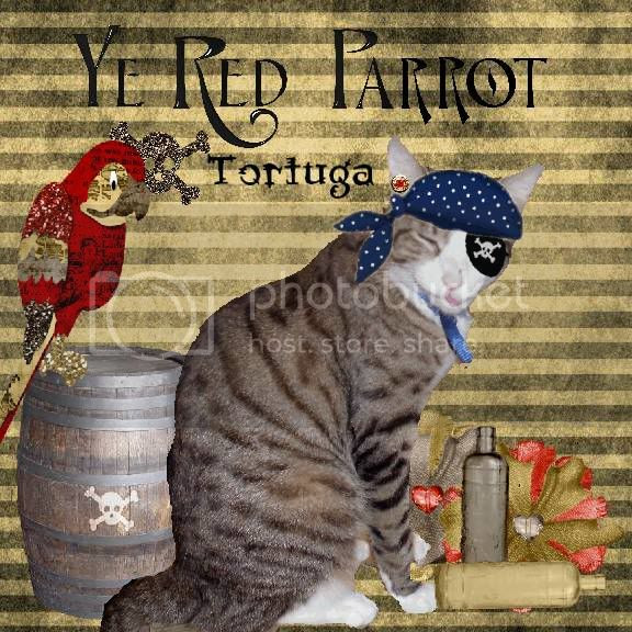 Domestic Cat,Pirate,Sir Tristan,Tabby Cat