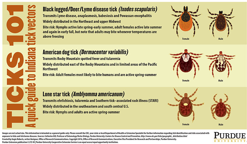 Bit by a tick? Next steps and species to know - Purdue ...