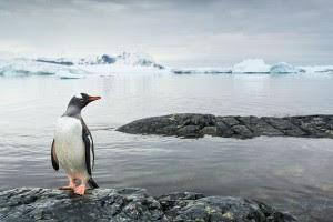 penguins-ancient-cold-snap-evolution-antarctica_73405_600x450