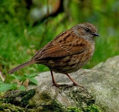 photo sparrows_zps34afa046.jpg